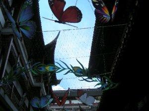 上海のチョウ
