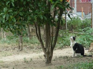 何かを見つめるネコ