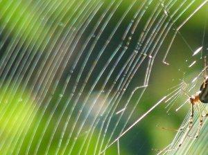虹色のクモの巣